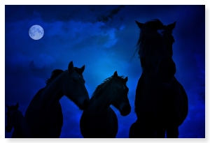 courtesyhttp://saintgirlincrisis.blogspot.com/2009/09/horses-at-night.html