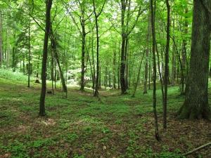 courtesy http://en.wikipedia.org/wiki/Knyszy%C5%84_Forest_Landscape_Park
